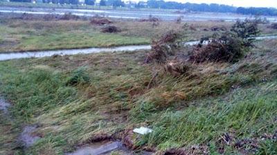 日野市側の河原