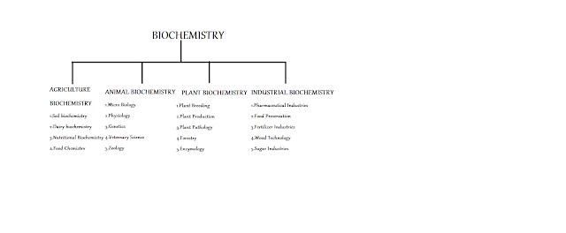 BIOCHEMISTRY,SCOPE,IMPORTANCE,HISTORY OF BIOCHEMISTRY,https://mahmad6.blogspot.com