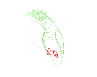 HOW TO DRAW A Cockatoo