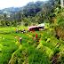Bus Pastra  Membawa Rombongan dari Lubuk Gadang,  Jatuh ke Areal Persawahan, 2 Meninggal Puluhan Luka-luka
