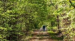 Proses sosial dalam pengelolaan hutan merupakan kegiatan interaksi sosial yang terjadi dalam kurun waktu tertentu dalam pengelolaan kawasan hutan sehingga mampu menunjukkan pola perilaku kehidupan bermasyarakat secara berulang. Proses sosial pengelolaan hutan umumnya terdiri dari dua proses yakni proses sosial yang asosiatif dimana terdiri dari akomodasi, amalgasi, asimilasi, dan kooperasi. Sedangkan proses yang kedua adalah proses sosial yang disosiatif yang terdiri dari kompetisi, konflik, dan kontravensi.