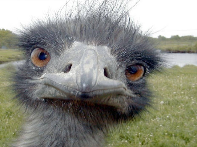 funny ostrich looking