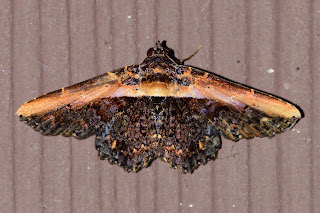 moth on side of house