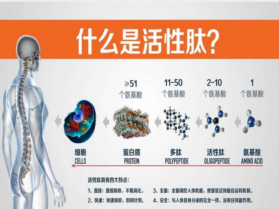 小分子活勝肽 肽核酸健康分享平臺