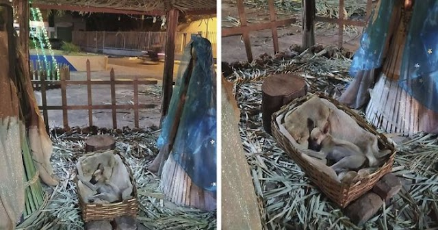 Woman Passing By Nativity Scene Noticed Someone Super Adorable Sleeping In The Manger