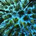 Ada Berapa Jenis Pohon yang Menghuni Indonesia? Pergilah ke Bogor, Anda Akan Tahu Jawabannya