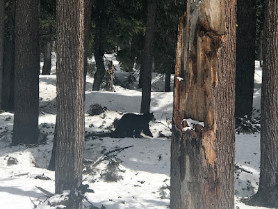 Paul spotted a black bear off the 62