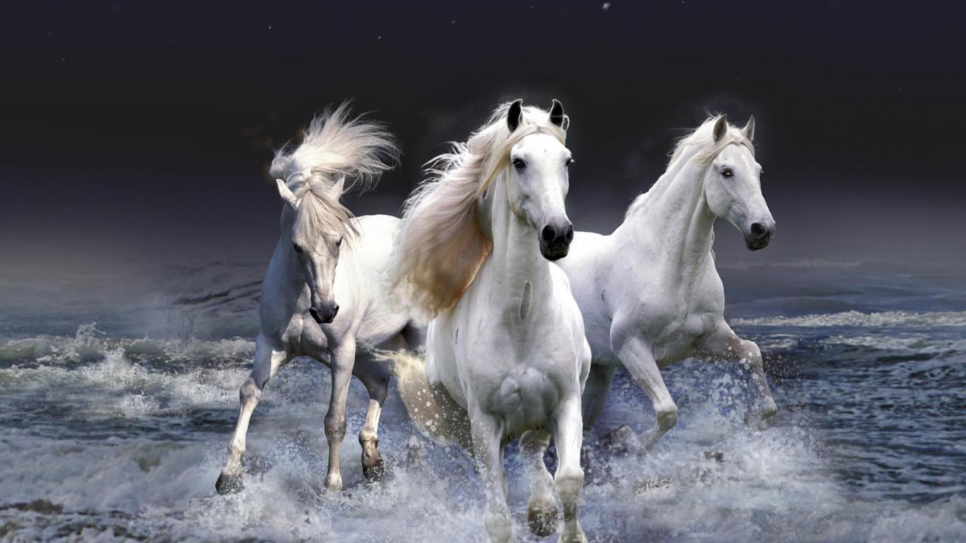 خلفيات خيول للايفون