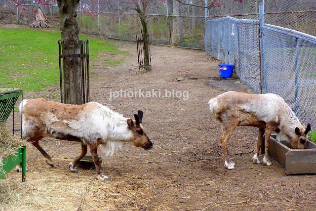High-Park-Zoo