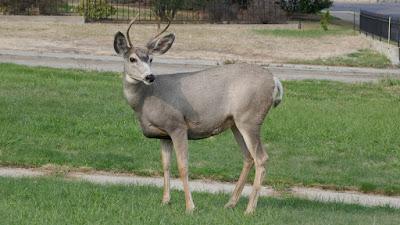 wildlife, animals, Medicine Hat, Alberta