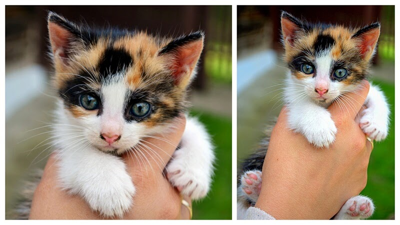 kot, kociak, kociatko, male zwierzatko
