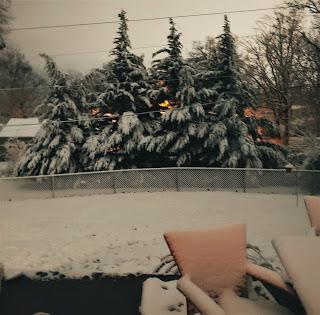 Snow on Leland Cypress Trees