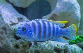 How to Keep Nitrate Under Control in the Aquarium?