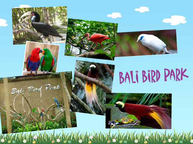 Bali Bird Park 15 Things to do in Bali