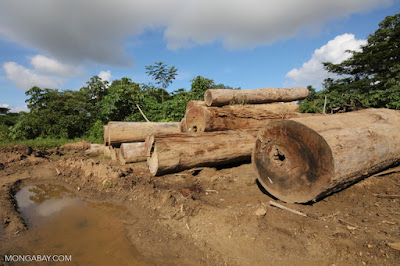 Illegal logging in amazon rainforest