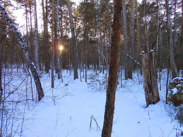 Свет солнца сквозь деревья
