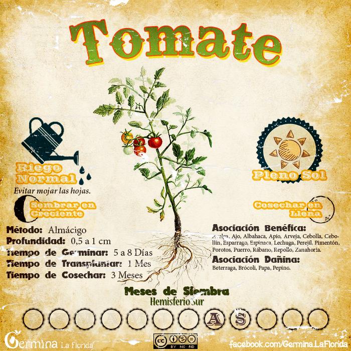 Germina la florida calendario de siembra de agosto for Asociacion de cultivos tomate