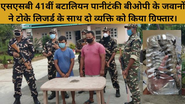 एसएसबी 41वीं बटालियन पानीटंकी बीओपी के जवानों ने टोके लिजर्ड के साथ दो व्यक्ति को किया ग्रिफ्तार।