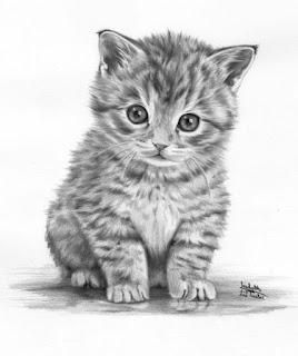 sketsa kucing lucu