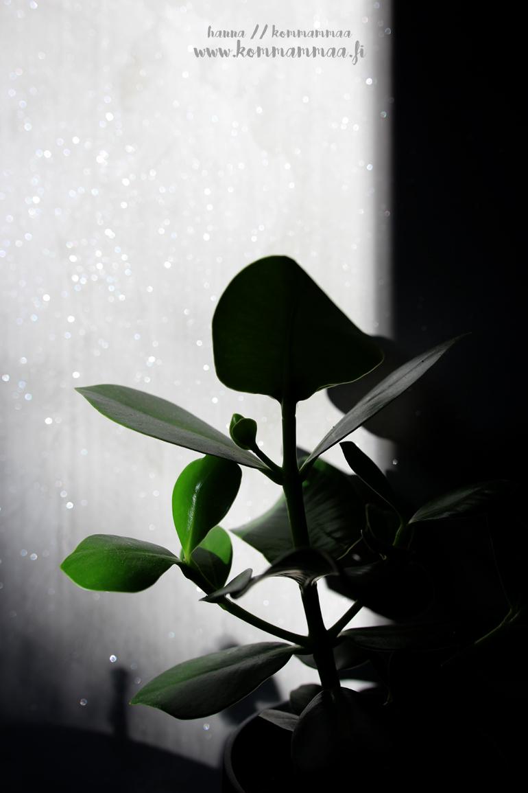 hopeakimalteet kiiltää auringossa tikkurila taika stardust