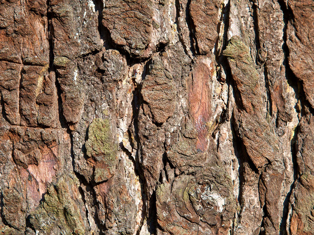 Wallpapers Tree Bark Wallpapers