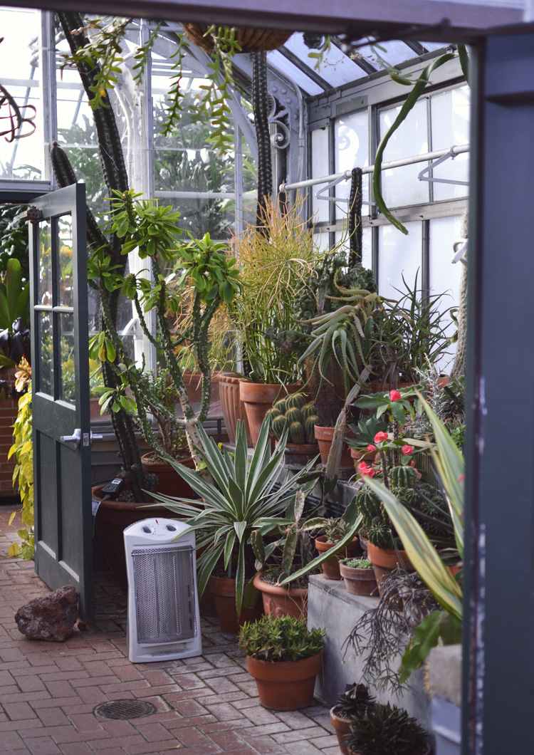 The Flying Clubhouse: Conservatory