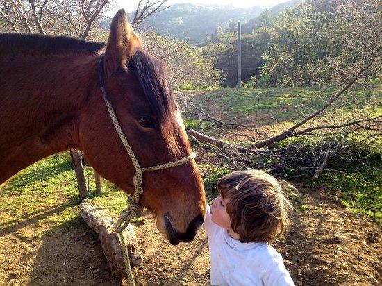 Passear de cavalo no verão em Valparaíso