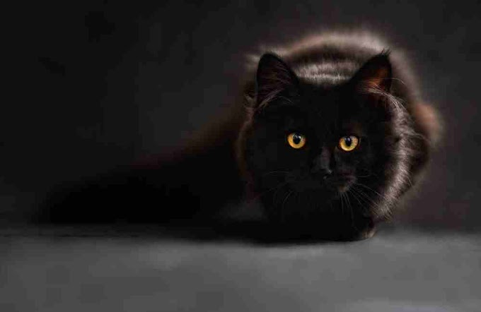 200+Amezing black cat names female, male,