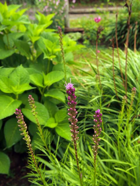 My Bar Harbor Maine garden, blogged by Dayana Knits