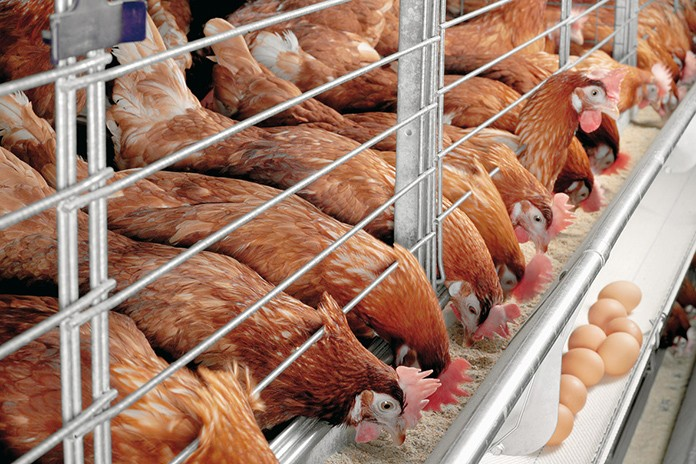 Poultry Feed Production