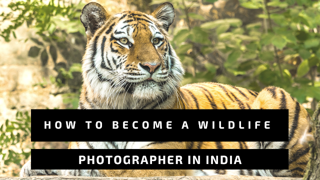 How to Become a Wildlife Photographer in India