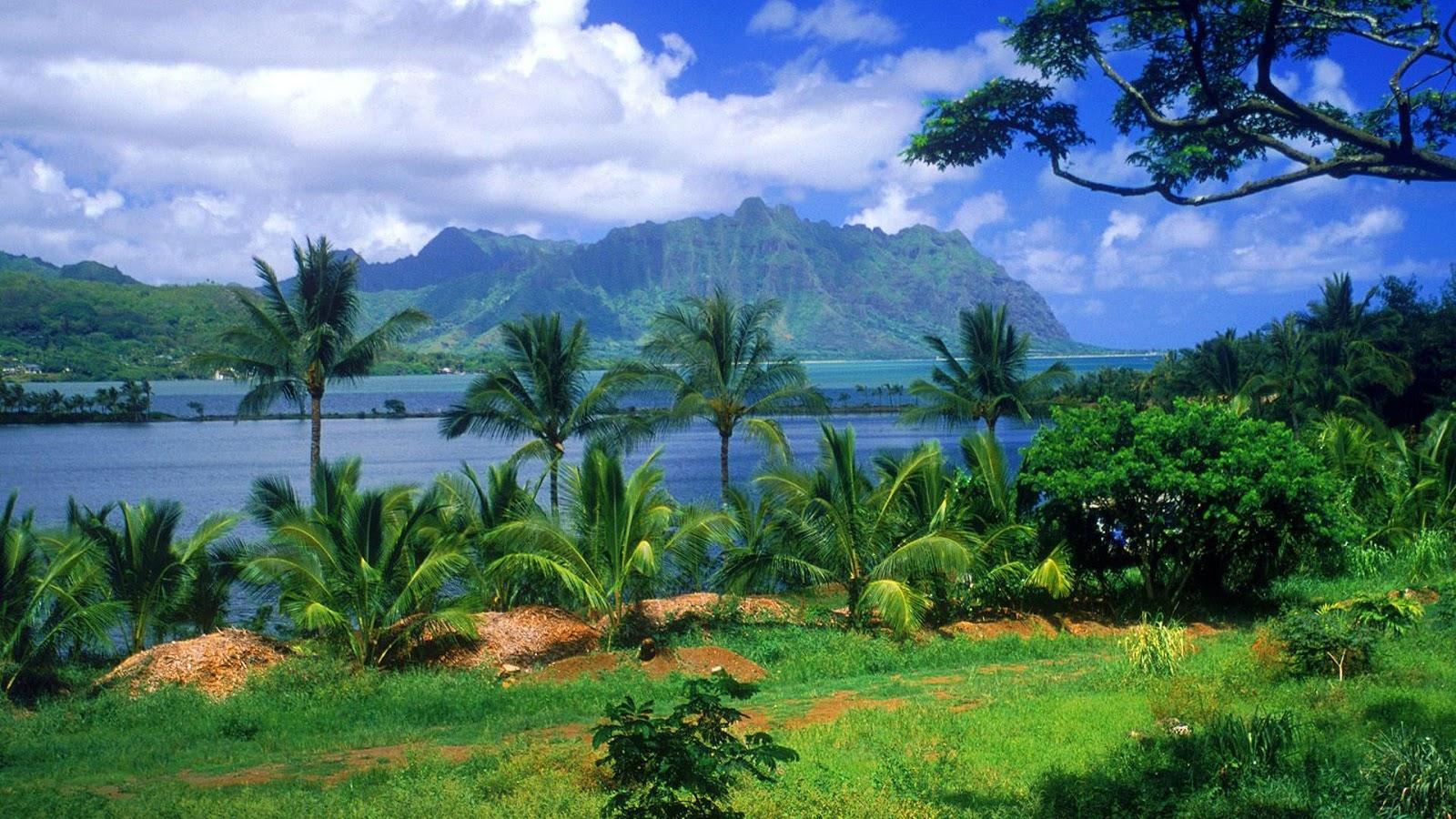 palm landscape wallpapers