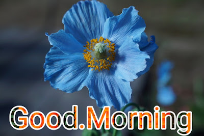 Good morning Rose HD