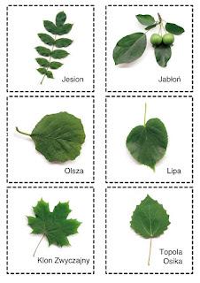 Przykłady liści