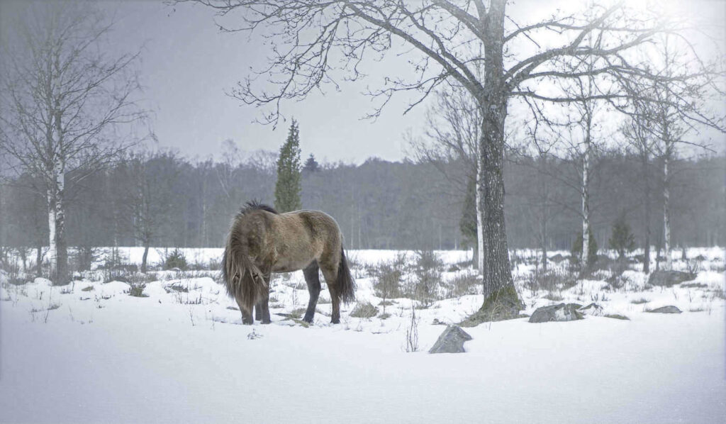 Ask a Farrier: How Do I Help My Horse Stay Safer on Ice?