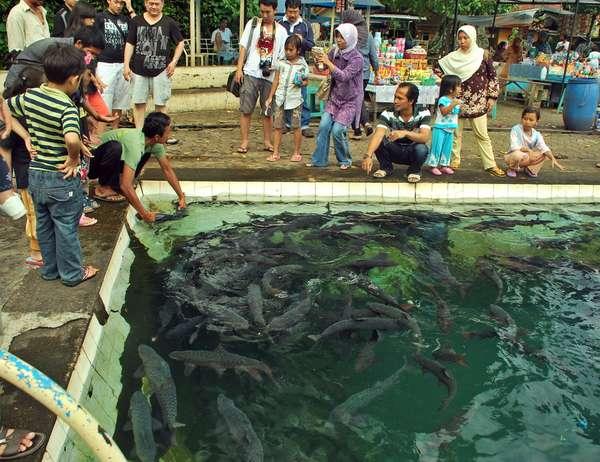 Pemandian Cibulan, Cirebon