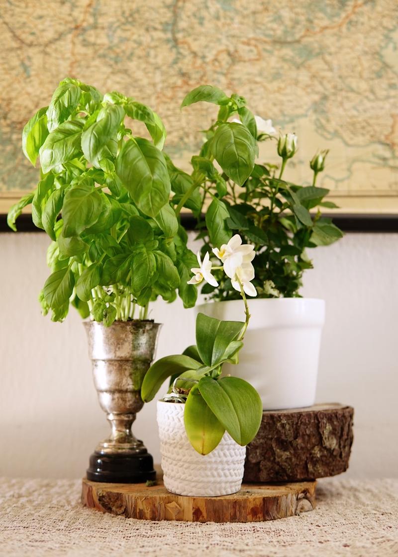 basilika, orkidea, ruukkuruusu