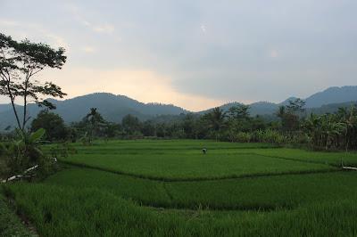 Suasana alam desa Cikondang, Kecamatan Cibeber, Kabpuaten Cianjur, Jawa Barat