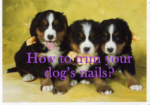 How to trim your dog's nails safely?
