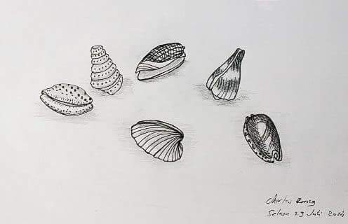 Seashell Art Drawing