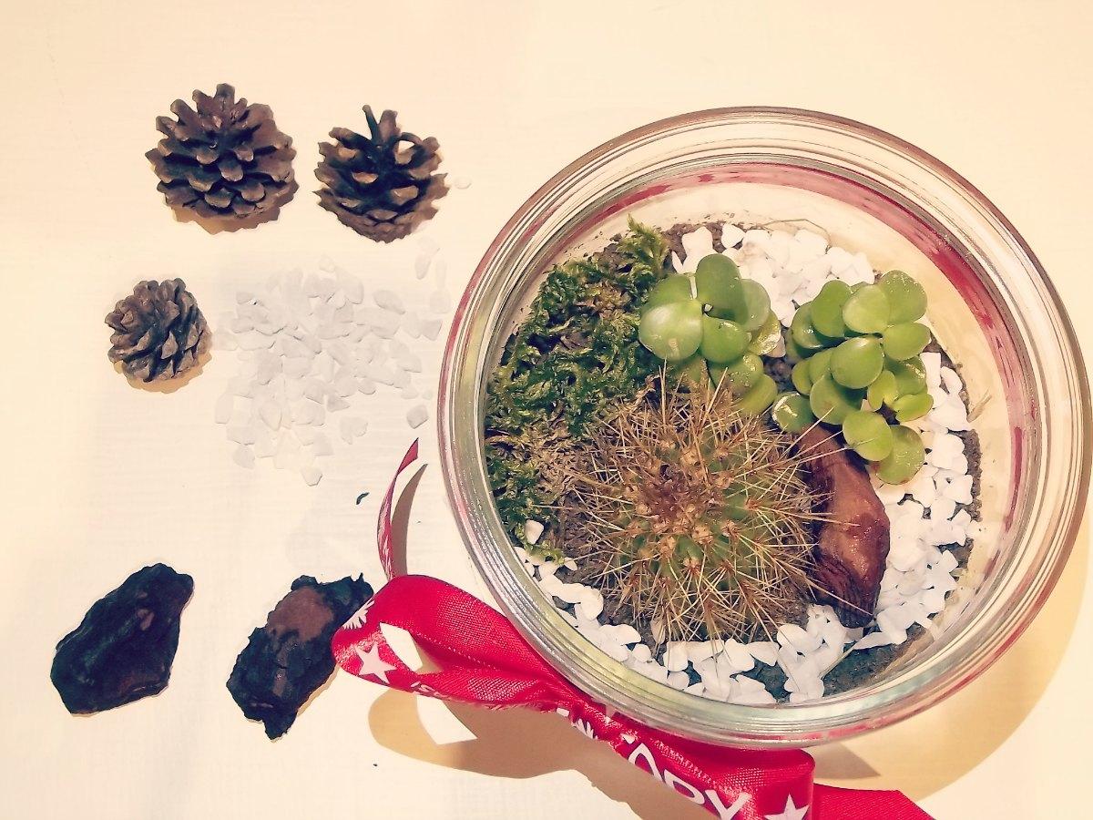 Terrario Per Piante Grasse idea regalo fai da te: terrario per piante grasse - ma