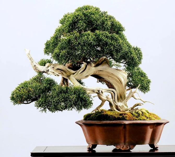 keio plaza tokyo omiya bonsai art museum saitama