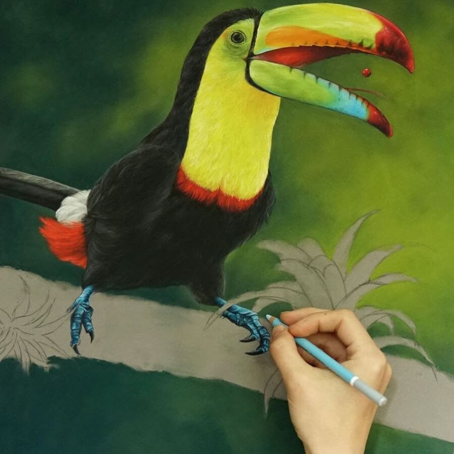 05-Toucan-Julia-M-www-designstack-co