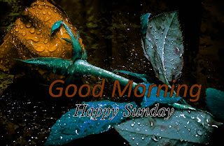 New Good Morning 4k Full HD Images Download For Daily%2B76