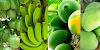 कच्चे फल हरे रंग के क्यों होते हैं, पकने के बाद रंग क्यों बदल जाता है / GK IN HINDI