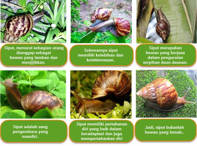 Hewan avertebrata merupakan hewan yang tidak memiliki tulang belakang Ide Pokok Siput Bukanlah Hewan Lemah