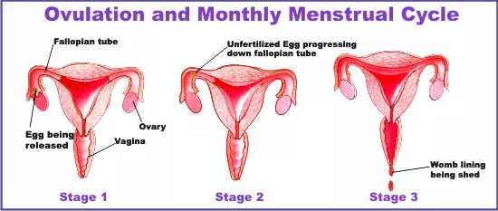 How is the best way to get pregnant, Foods, and Lifestyle
