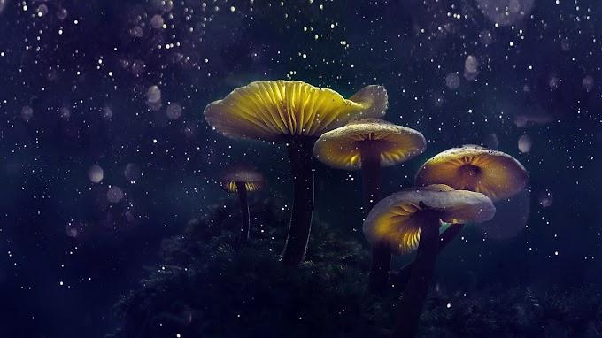 Papel de Parede Cogumelos Mágicos