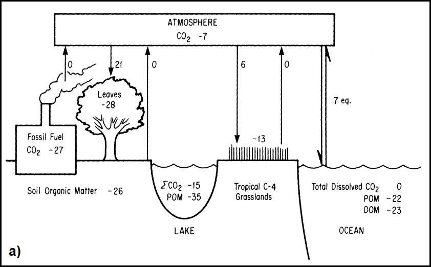 Isotopo di carbonio utilizzato per le cose datazione in archeologia