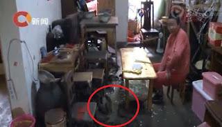 Menjijikkan, Kakek Ini Pelihara Puluhan Tikus di Rumahnya